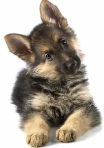 Auntie Sally Dog & Puppy Training Photo